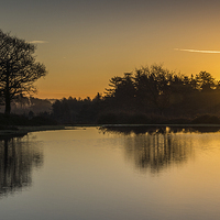 Buy canvas prints of New Forest Sunrise by Phil Wareham