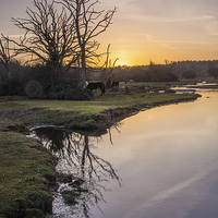 Buy canvas prints of Mill Lawn Brook at Sunrise  by Phil Wareham
