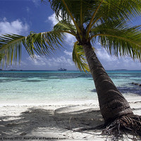 Buy canvas prints of Palm tree by Iona Semay