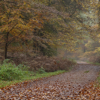 Buy canvas prints of  Down the Forest Track by David Tinsley