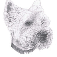 Buy canvas prints of West Highland Terrier by Gordon and Gillian McFarland