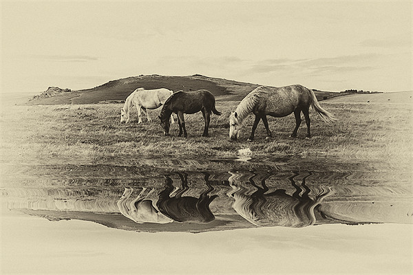 Reflection Canvas print by kevin wise