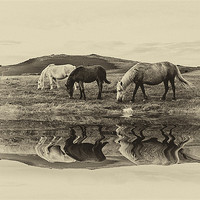Buy canvas prints of Reflection by kevin wise