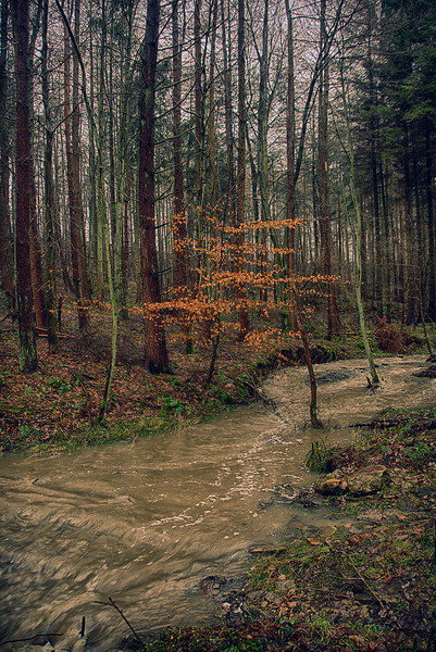 Flooded stream Canvas Print by kevin wise