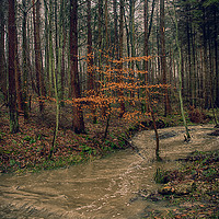 Buy canvas prints of Flooded stream by kevin wise