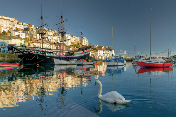 Brixham swan Canvas Print by kevin wise
