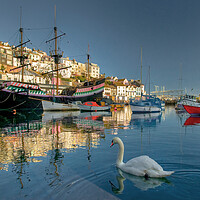 Buy canvas prints of Brixham swan by kevin wise