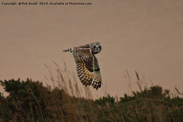 Short Eared Owl Canvas print by Rob Booth
