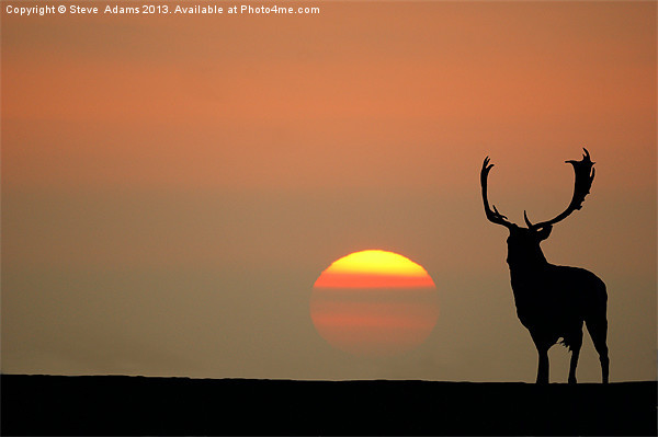 Sunset Stag Canvas print by Steve  Adams