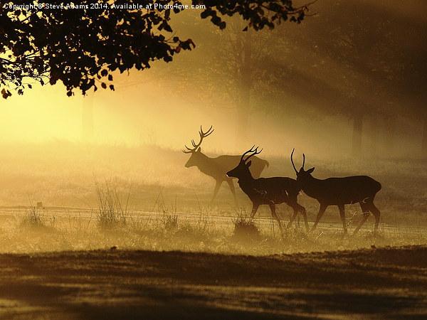 Golden Glow Canvas print by Steve Adams
