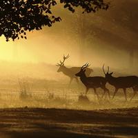 Buy canvas prints of  Golden Glow by Steve Adams