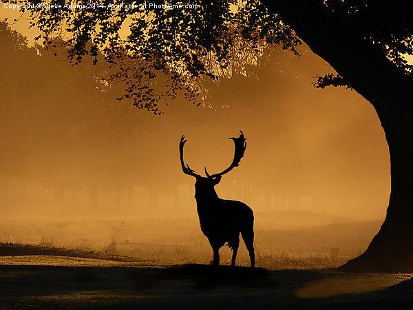 Fallow buck Silhouette Canvas print by Steve Adams