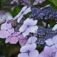 Buy canvas prints of Sweet Purple Paradise! by Eleanor McCabe