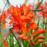 Buy canvas prints of Summer Stars! by Eleanor McCabe