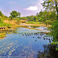 Buy canvas prints of on the blackwater in essex by linda cook