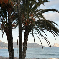 Buy canvas prints of Palm Trees  by Jacqui Farrell