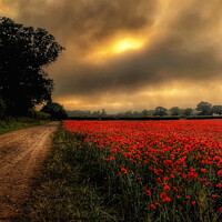 Buy canvas prints of Heacham Poppies North Norfolk by Jacqui Farrell