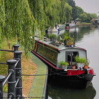Buy canvas prints of Ely Riverside Canal Boat  by Jacqui Farrell