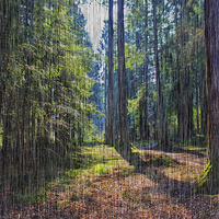 Buy canvas prints of Rain in the Forest by Andy Anderson