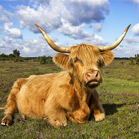 Buy canvas prints of Highland Cattle in New Forest by Jennie Franklin Landscape Prints & Canvas