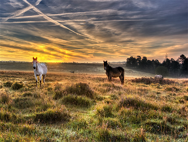 Early Morning Horses Canvas print by Jennie Franklin Landscape Prints & Canvas