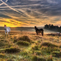 Buy canvas prints of Early Morning Horses by Jennie Franklin Landscape Prints & Canvas