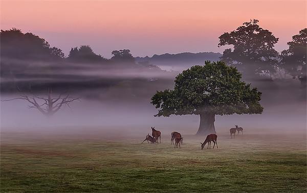 Misty Deer and Tree Canvas print by Jennie Franklin Landscape Prints & Canvas