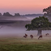Buy canvas prints of Misty Deer and Tree by Jennie Franklin Landscape Prints & Canvas