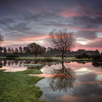Buy canvas prints of  Janesmoor Pond at Sunrise by Jennie Franklin