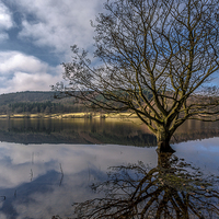Buy canvas prints of Lake tree by Gary Finnigan