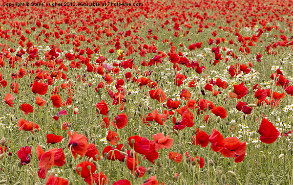 Red Sea of Poppies Canvas print by Steve Hughes