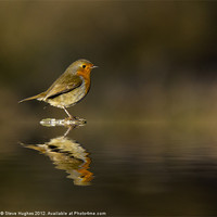 Buy canvas prints of Reflecting Robin (Erithacus rubecula) by Steve Hughes