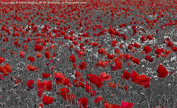 Poppy field selective colouring Canvas print by Steve Hughes