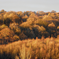 Buy canvas prints of Autumn Colour by Roger Butler