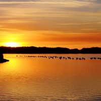 Buy canvas prints of Geese at Sunset by Paula J James
