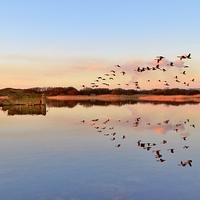 Buy canvas prints of Geese in Flight by Paula J James