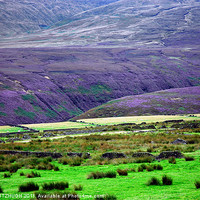 Buy canvas prints of The Moors and The Heather by JEAN FITZHUGH