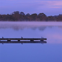 Buy canvas prints of Misty Morning at Muckross by John McCoubrey