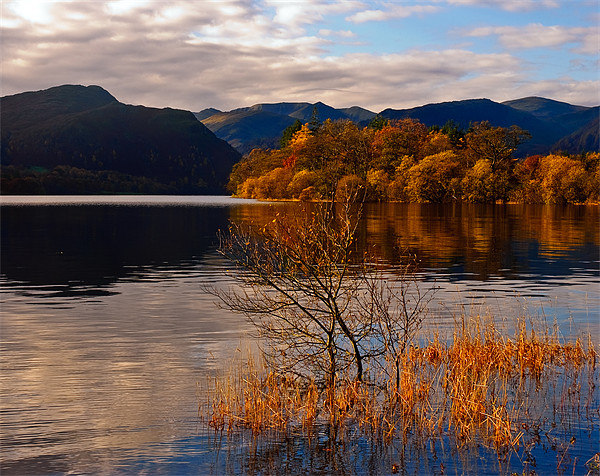 Rydal Gold Canvas print by eric carpenter