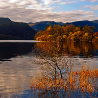 Buy canvas prints of Rydal Gold by eric carpenter