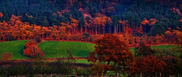 autumn  trees Canvas print by sue davies