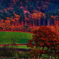 Buy canvas prints of autumn  trees by sue davies
