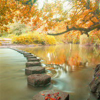 Buy canvas prints of Box Hill Stepping Stones by Clive Eariss