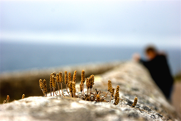weeds on a wall Canvas print by Jordan Wills