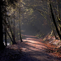 Buy canvas prints of Woodland path by Macrae Images