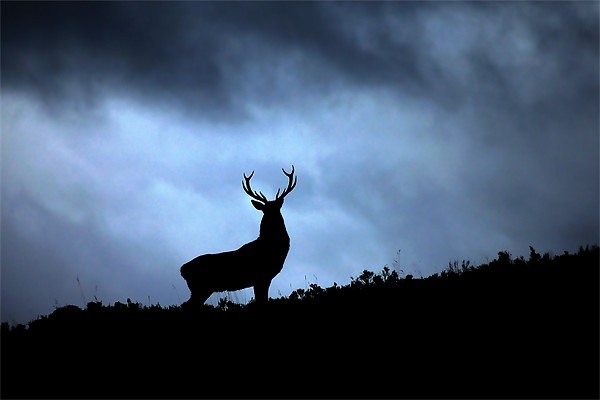 Stag silhouette Canvas print by Macrae Images