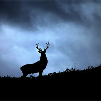 Buy canvas prints of Stag silhouette by Macrae Images