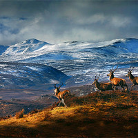 Buy canvas prints of Above Strathglass by Macrae Images