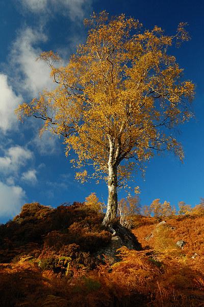 Autumn Gold Canvas print by Macrae Images