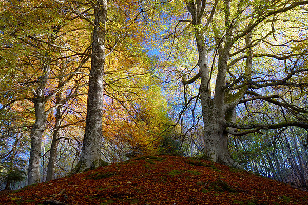 Reelig Forest Canvas print by Macrae Images